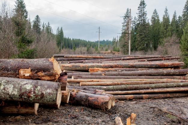 En lucha contra las deforestaciones